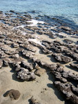 Stromatolites at Shark Bay_1.jpg