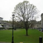 Fellows' Square