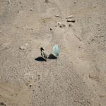 Butterflies on the beach