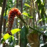 Rainforest Colours