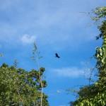 Vultures circling