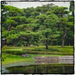 Imperial Palace Gardens (1)