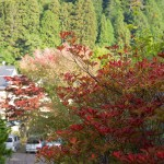 Autumn colours in Koyasan